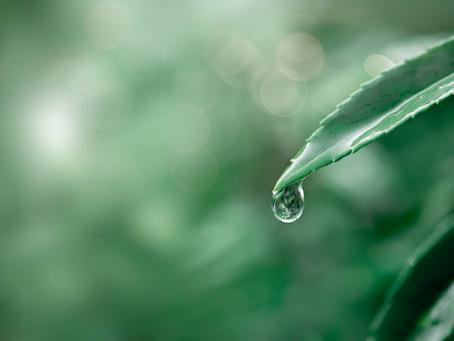 Quanto economizo aproveitando a água de chuva?