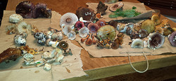 Summer Mushroom Forage