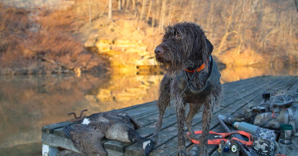 Murphy Goose Hunting