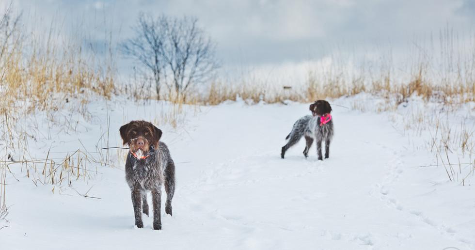 Murphy & Maisie Snowy Day.jpeg