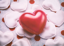 Seattle Pup Celebrates Valentine's Day