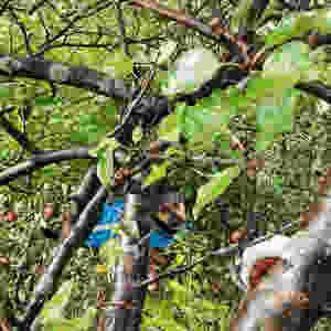 winery dog under apple tree