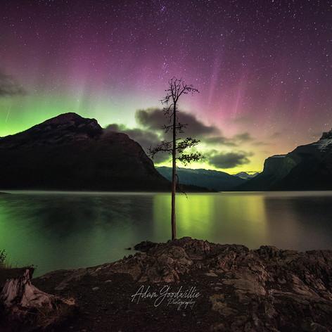 Northern lights tree Lake minnewanaka Banff Alberta