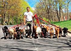 dogwalker1.jpg