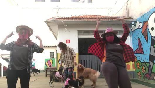 Arraiá Cão a Cão