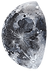 Moon_2 (1)tiny.png