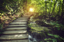 path through trees waterfall