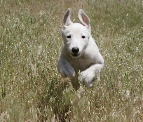 Dog Run_edited.jpg