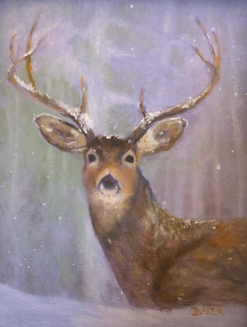 Buck Eyes