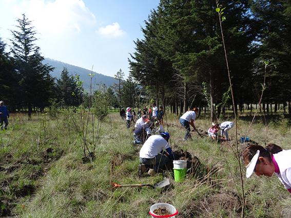 reforest-2016-06
