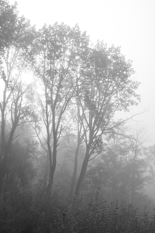 Fog-Burn