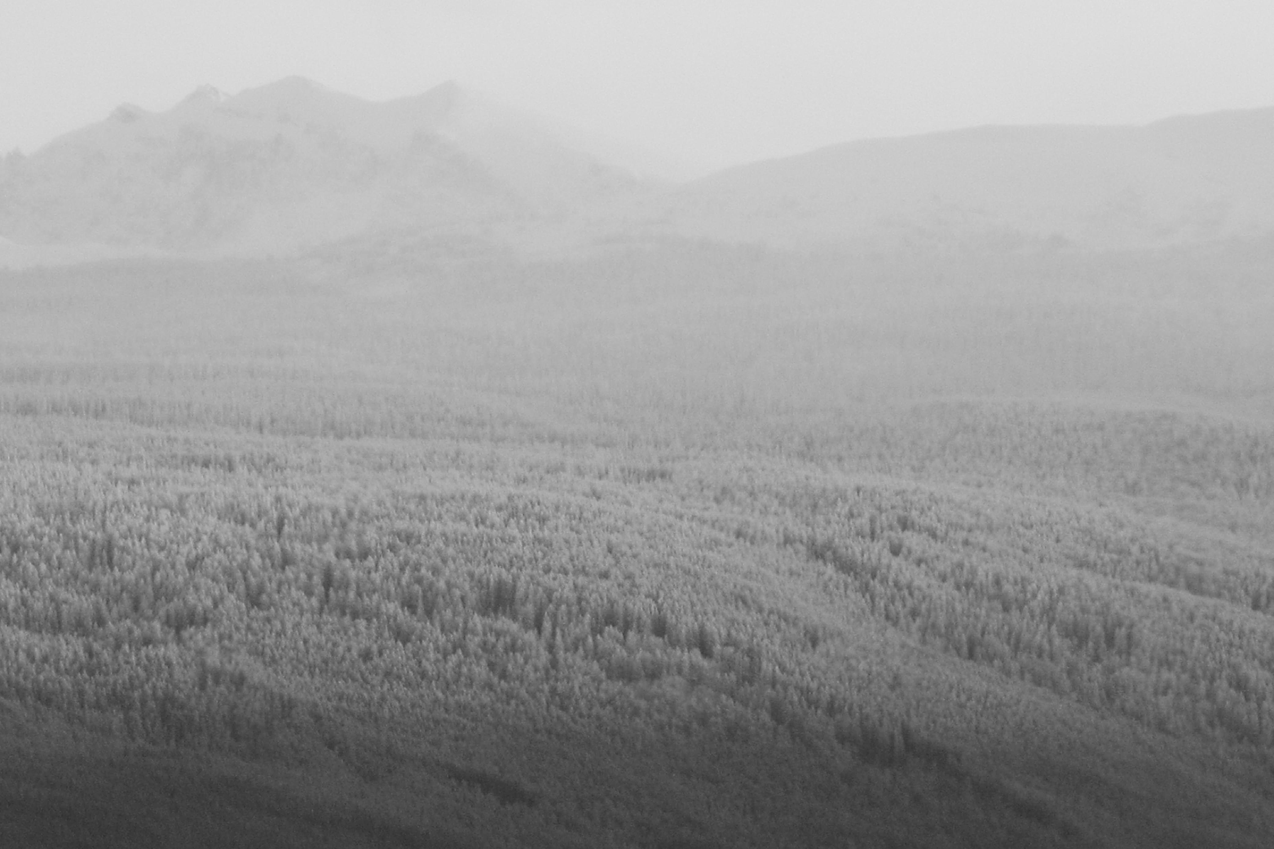 Jasper Valley. 2010