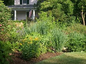 Virgnia Native Plants