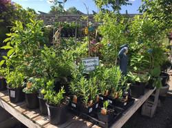 May 2017 Greenstreat Gardens