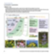 brandes_book-14.jpg