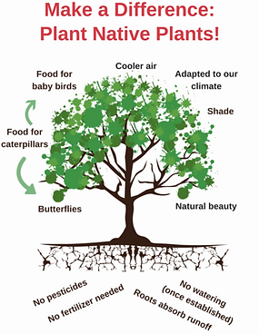 Make a difference: plant native plants