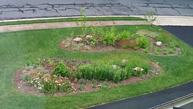 Replacing lawn yarrow, bee balm.jpg