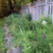Liatris spicata, Rudbeckia hirta, Phlox
