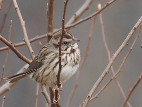 When a migrating bird looks down on your yard, what does it see?