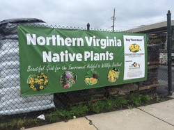 May 2016 Greenstreet Gardens promoting native plant sales