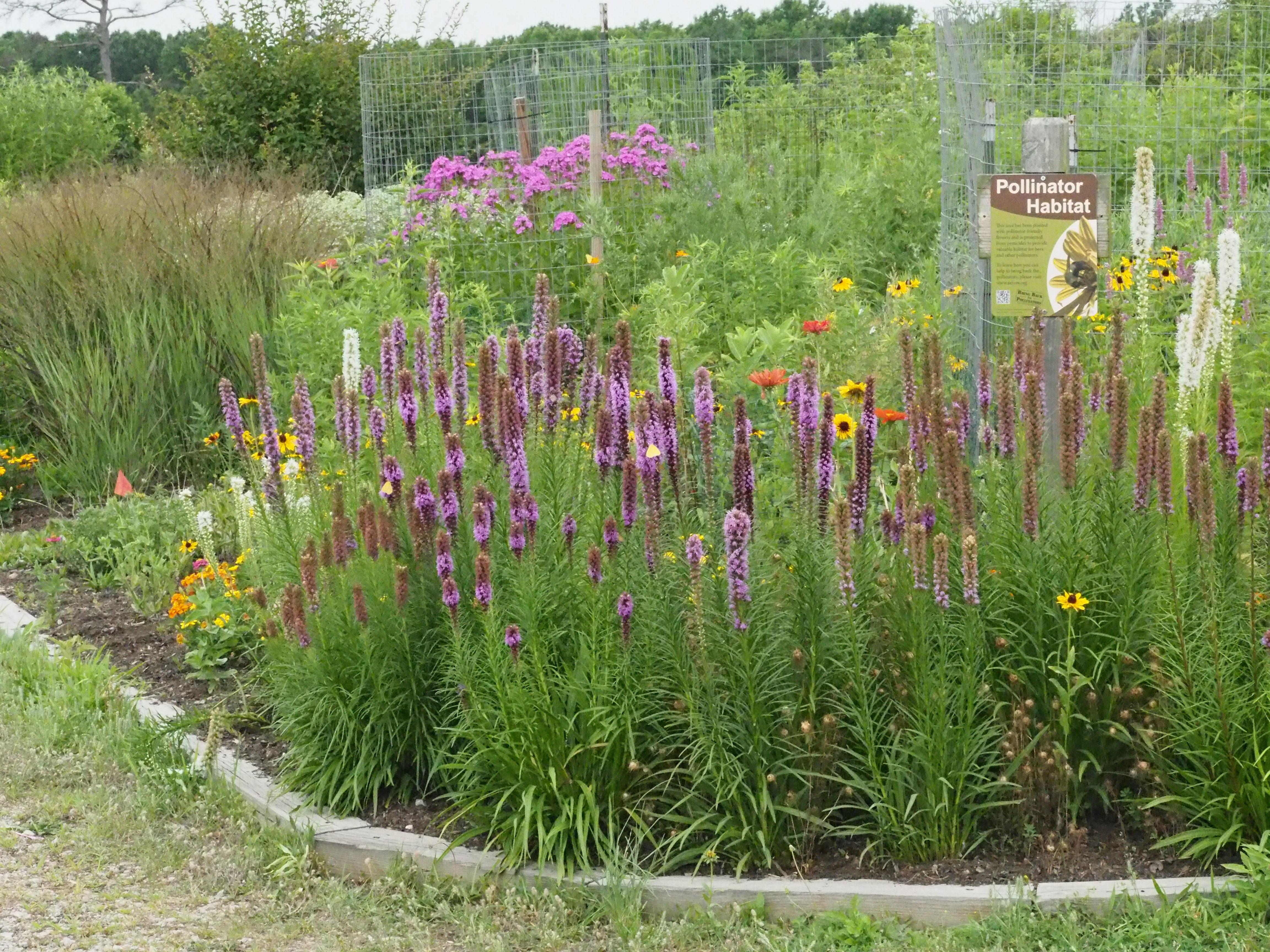 Pollinator habitat garden on Mason Neck