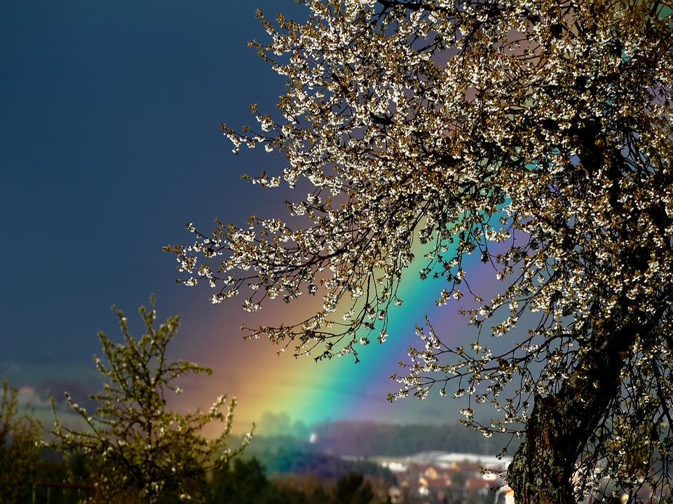 a rainbow can be seen in a stormy, dark sky; a tree with rain-soaked branches is in the forefront
