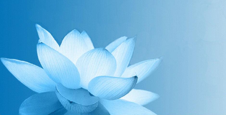 Blue+Lotus+hi+res.jpg