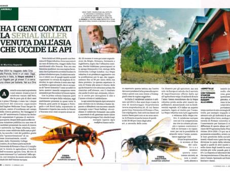 """Vespa velutina and the 25genomes challenge covered by """"Il Venerdi"""" de la Repubblica."""