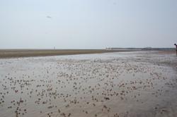 spiaggiaadotilla
