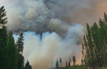 Varios incendios forestales en British Columbia provocan numerosas evacuaciones.