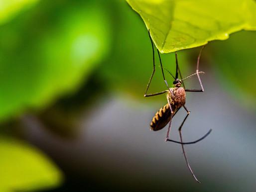 Toronto confirma el primer caso positivo del virus del Nilo Occidental