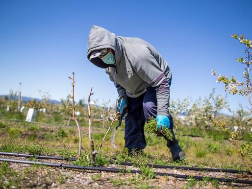 Piden acceso a la vacuna COVID-19 para trabajadores migrantes e indocumentados