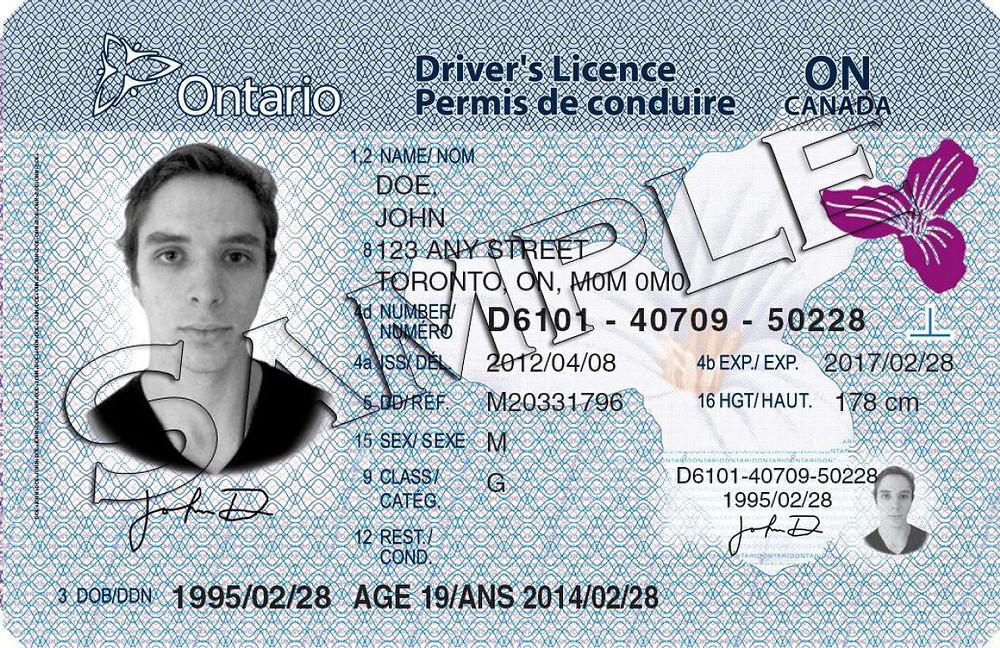 Muestra de una licencia de conducir.