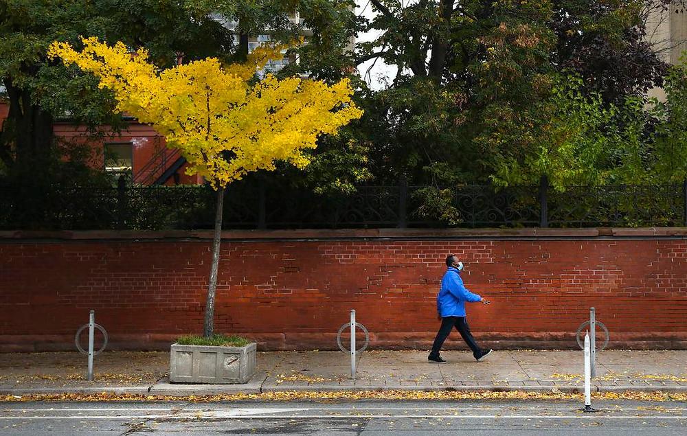 Un hombre camina por la calle Bloor en St. George con máscara y hojas coloridas.