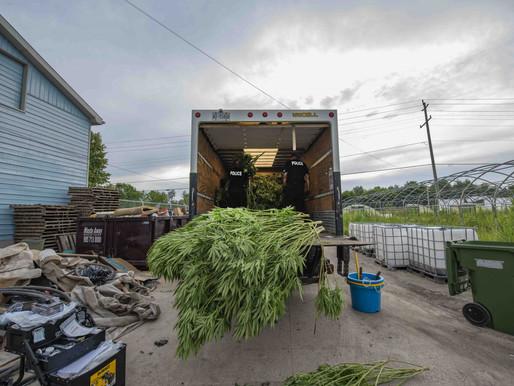 Confiscan marihuana y animales exóticos en redada
