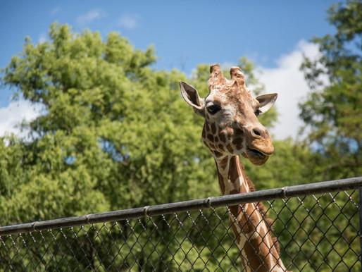El zoológico de Toronto ya tiene fecha de reapertura