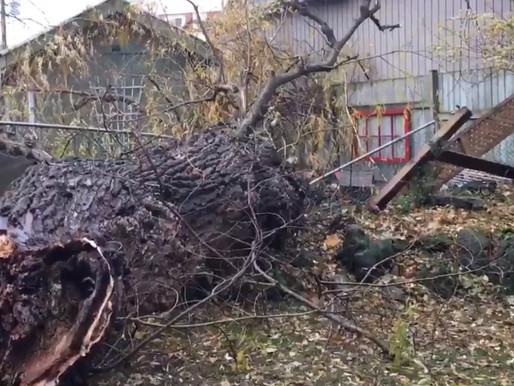 Fuertes vientos dejan a miles sin electricidad