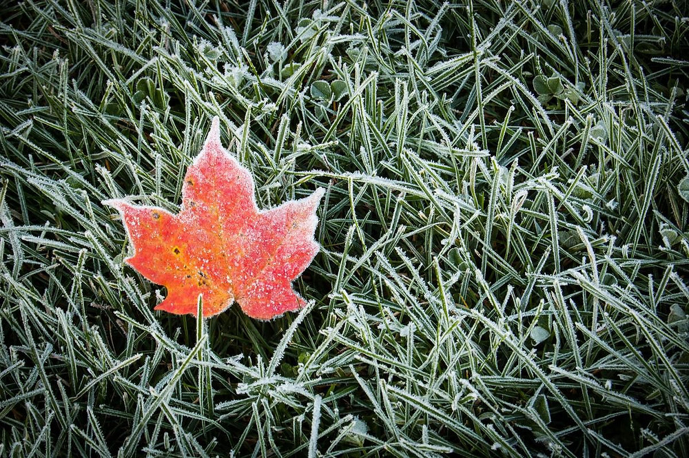 Environment Canada emitió la primera advertencia de heladas de la temporada el viernes.