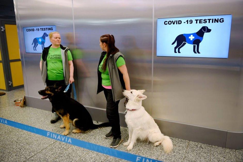 perros detectores de coronavirus Valo (L) y ET se sientan cerca de sus entrenadores en el aeropuerto de Helsinki en Vantaa, Finlandia, para detectar el COVID-19 de los pasajeros que llegan, el 22 de septiembre de 2020.