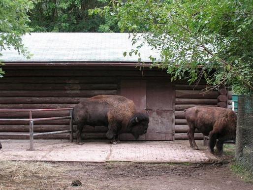 La granja de Riverdale y el zoológico de High Park abren este fin de semana