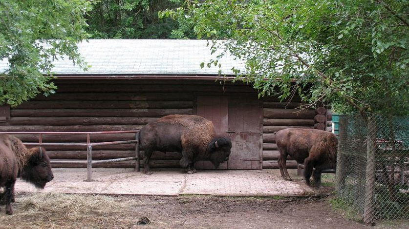 La granja de Riverdale y el zoológico de High Park abren este fin de semana.