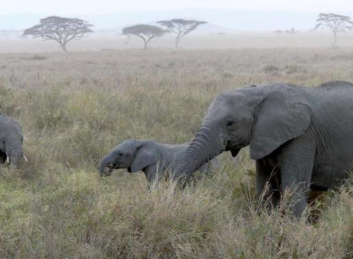 Dos tercios de la vida silvestre mundial han desaparecido
