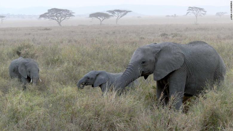 La actividad humana ha impulsado la disminución de especies, según el informe.