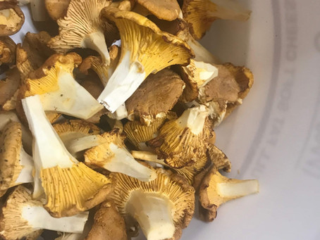 WILD food: Chanterelle Mushrooms