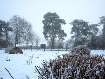 Beautiful Winter Farrowby