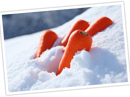 雪の下人参 「雪の下からこんにちは!」 500g/袋