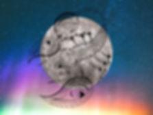 scorpio-full-moon-ritual-2020.jpg