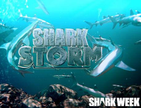 shark storm.JPG