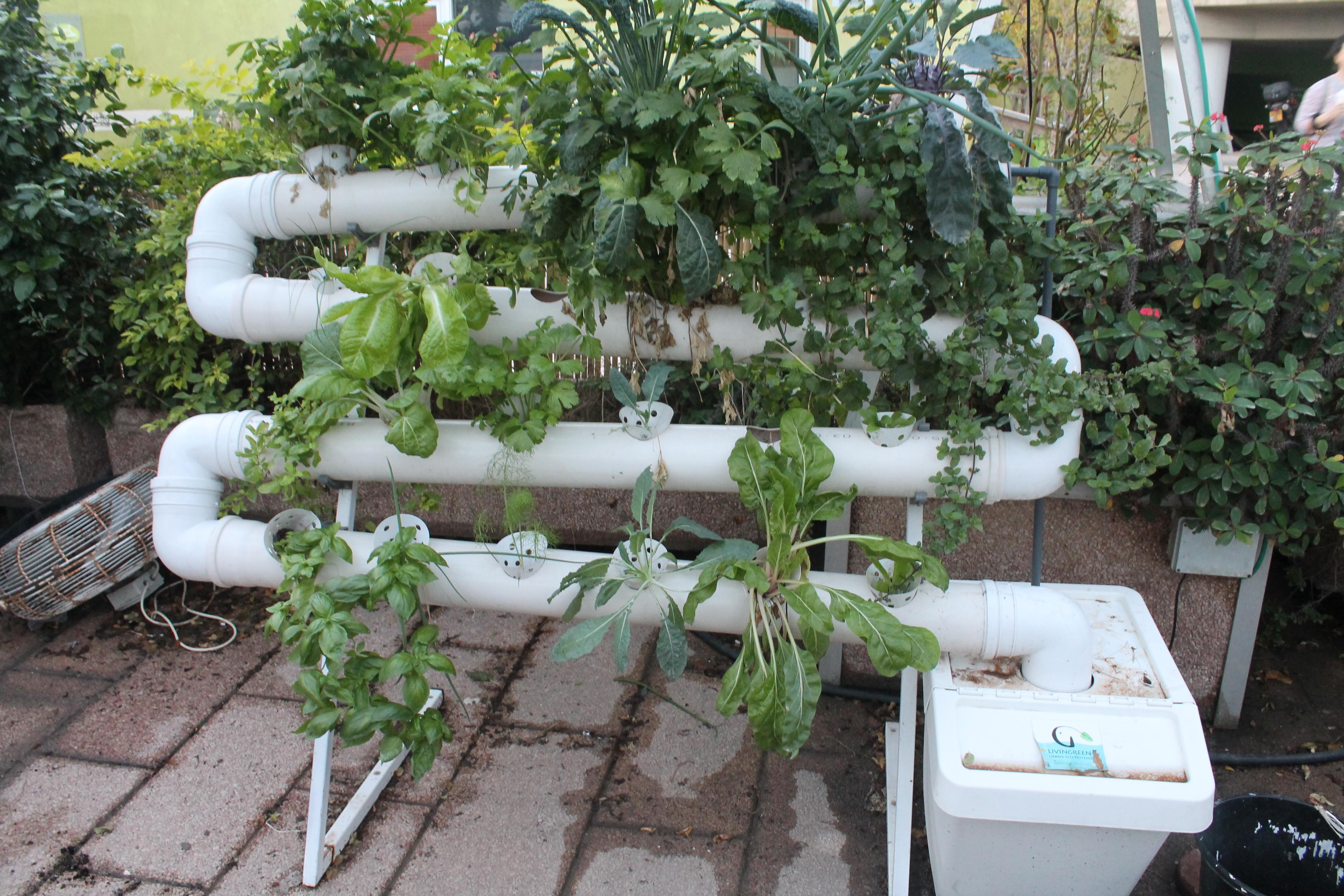 Urban agriculture visit
