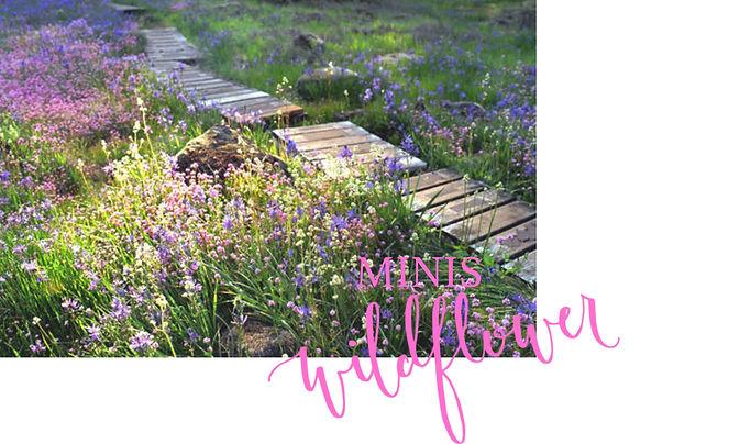 wildflower Mini Cover.jpg
